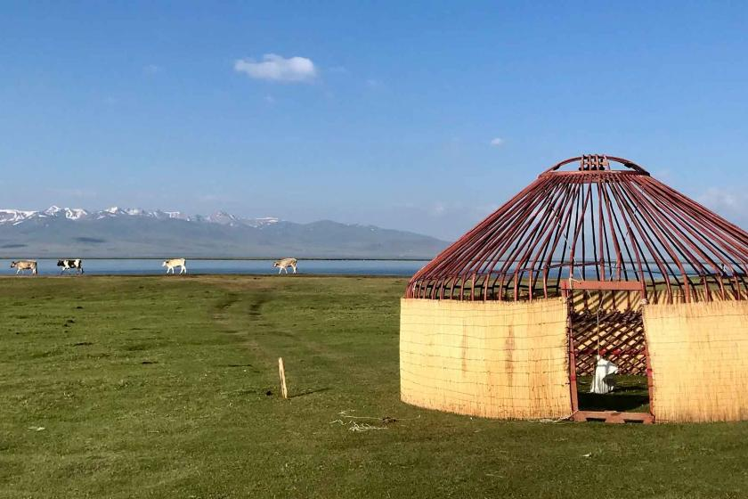 Yurt with cows grazing in the background